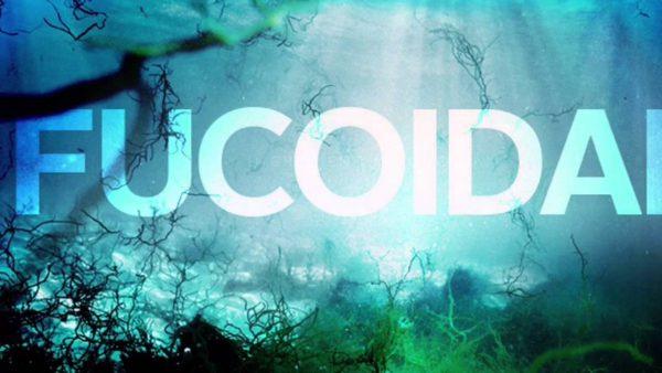 Fucoidan là thuốc gì? Nên dùng những loại fucoidan nào an toàn