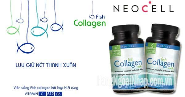 Fish Collagen + H.A