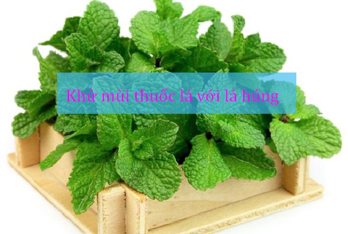 Khử mùi thuốc lá bằng thảo dược 1