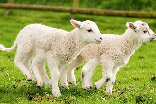 Top 3 serum nhau thai cừu của úc tốt nhất-2