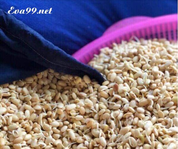 Cách làm mầm đậu nành nguyên chất tại Nhà, Uống tăng vòng 1 hiệu quả 2