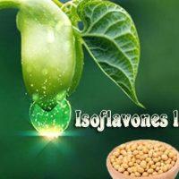Isoflavones là gì? Tác dụng ít ai biết từ Soy Isoflavones
